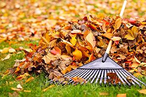 clean-leaves
